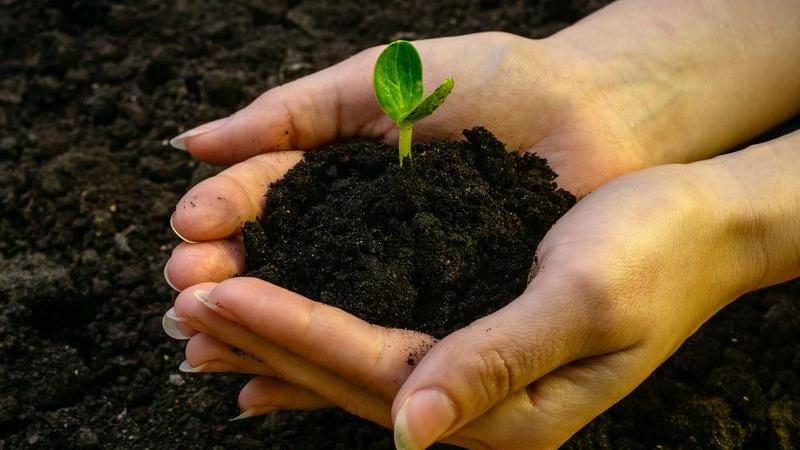 Nachhaltige Lebensmittelerzeugung