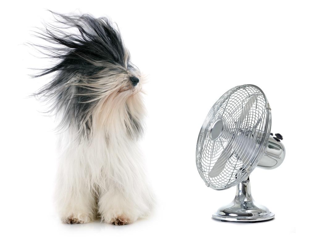 Wappnen Sie sich jetzt schon, denn die Sommerhitze kommt!