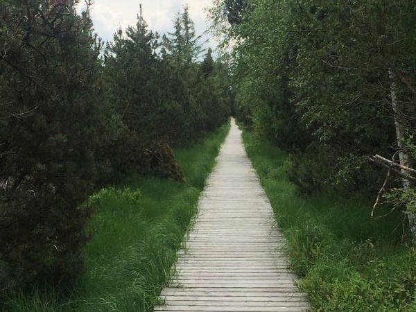 Dr. Anemone Bippes: Stadtwald von Baden-Baden hat großes Potential
