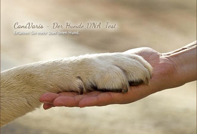 Per Genanalyse mehr über den eigenen Hund erfahren!