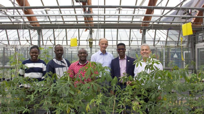 Pflanzenvirus bedroht Grundnahrungsmittel in Afrika