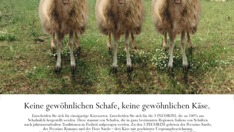 3 Peccorini – Italienische Schafkäse erobern deutsche Theken