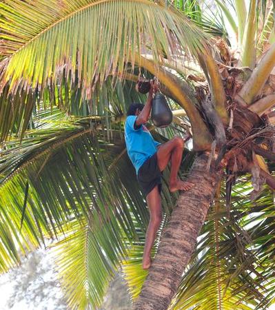 Palmöl als Multi-Talent unter den Agrarrohstoffen