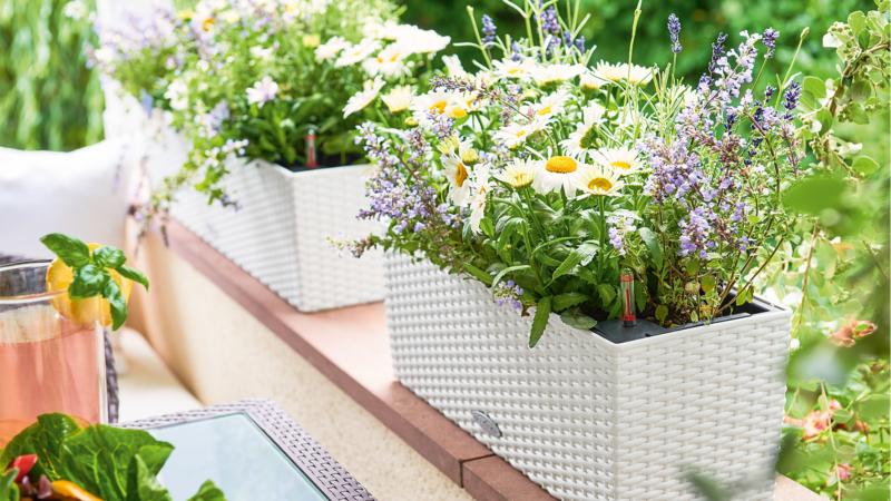 Zauberhafte Blütenpracht: Pflegeleichter Cottage-Garten
