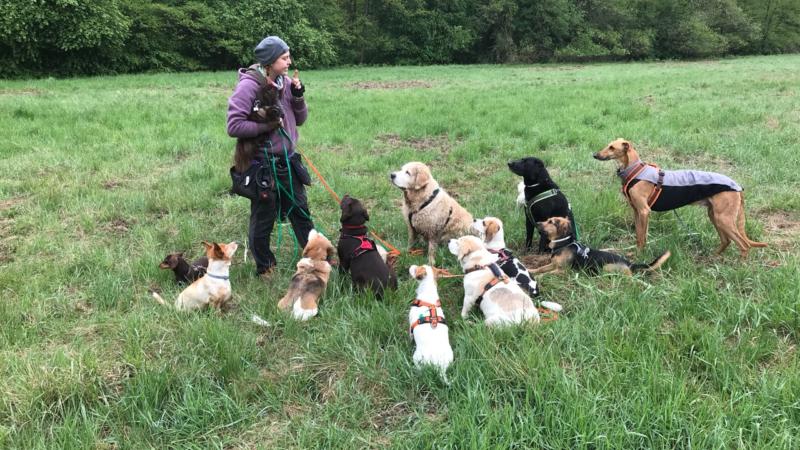 Neuer Start von Sanny's Dogwalker Ausbildung April 2020