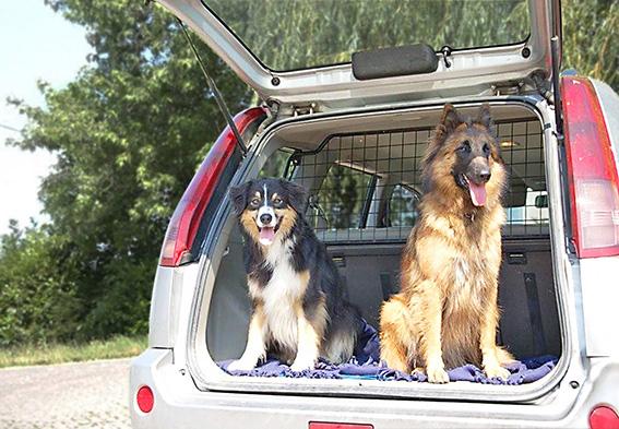 Hundeelend: Überhitzte Autos sind eine Qual für Vierbeiner