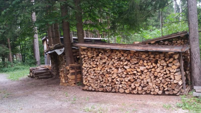 Spannende Fakten: Holz ist die Heizenergie in Zeiten des Klimawandels