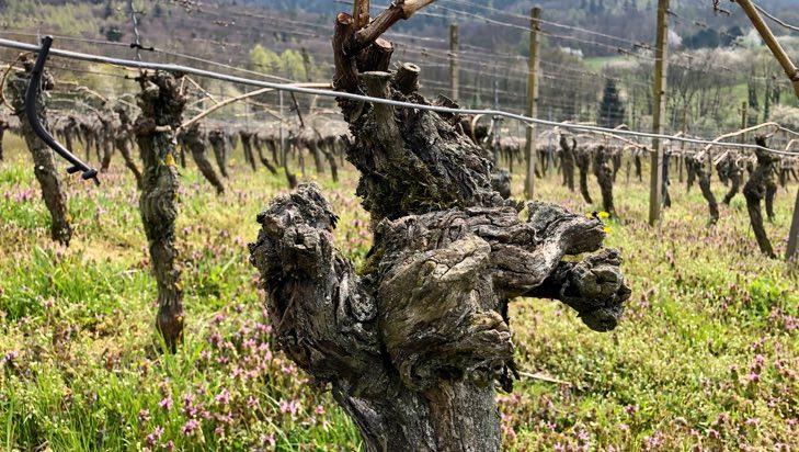 Wein und Weingüter mit SEO sichtbar machen
