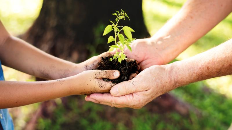 "Bürobedarf BBV-Domke unterstützt ""Plant for the planet"""