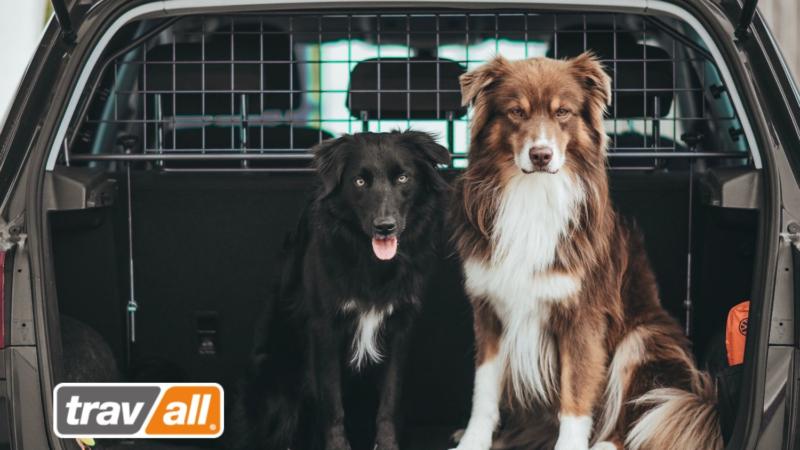Hunde in kleinen Autos sichern