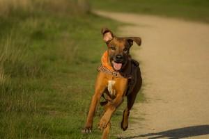 Reflektoren schützen Hunde während der dunklen Jahreszeit