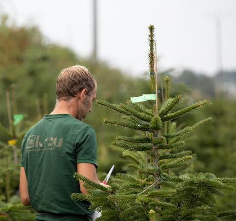 Neuer Online Shop: Sorglos Weihnachtsbaum online kaufen