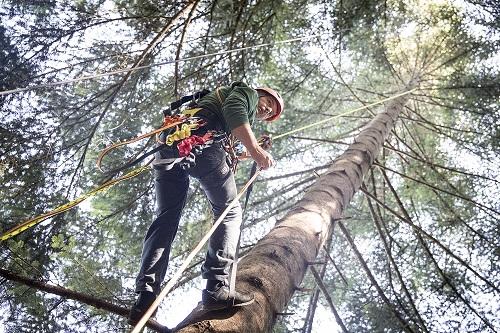 Faire Tannenbäume