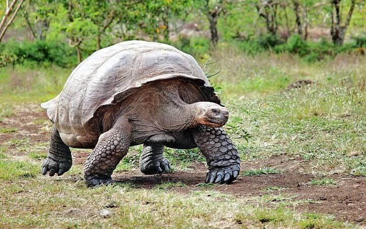 Einzigartige Natur, einzigartiges Erlebnis – Galapagos erleben!