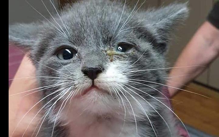 """Tierfreundliches Silvester: Spendenaktion """"Futter statt Böller"""""""