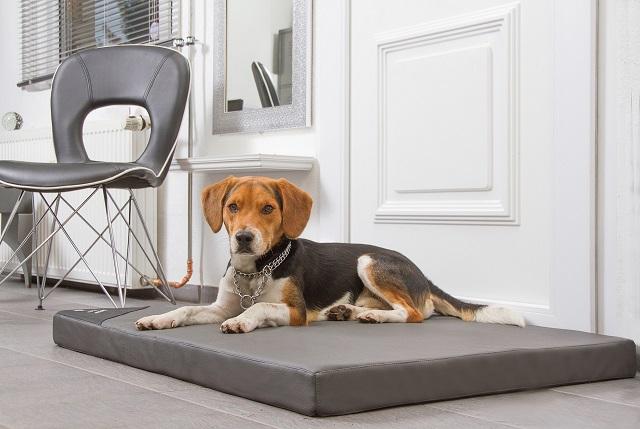 DoggyBed – Orthopädische Hundematte