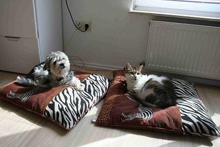 Grippe- und Erkältungswelle macht auch vor  Haustieren nicht Halt
