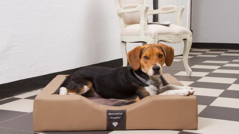 DoggyBed – Ein einzigartiges Hundebett