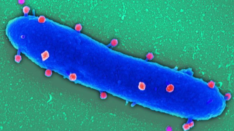 Mikroben können mehr als krankmachen