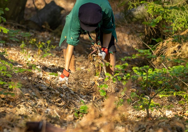 20.000 Stunden für den Wald – jetzt erst recht!