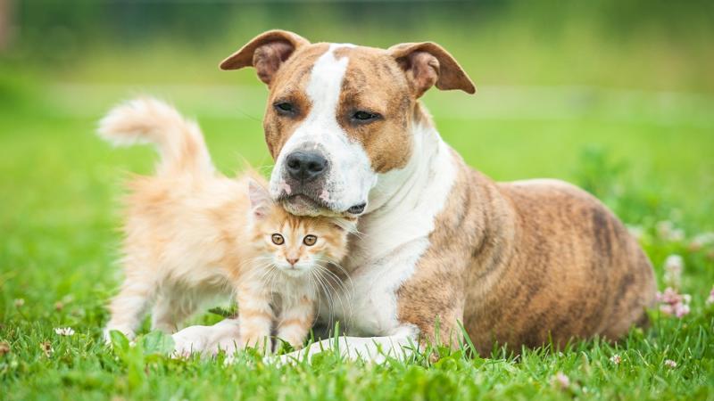 Bestattung von Haustieren während der Corona Pandemie