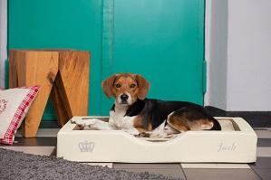 Hundeblog – News, Tipps, aktueller Ratgeber    Hundeblog – News, Tipps, aktueller Ratgeber