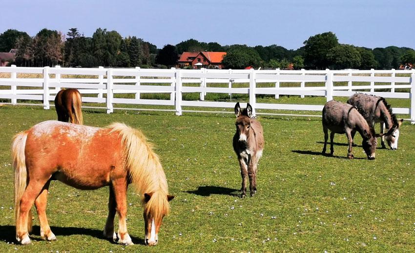 Ballermann Ranch öffnet wieder
