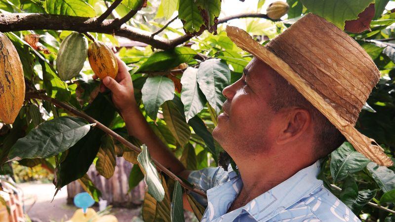 Kakao von zertifizierten Plantagen