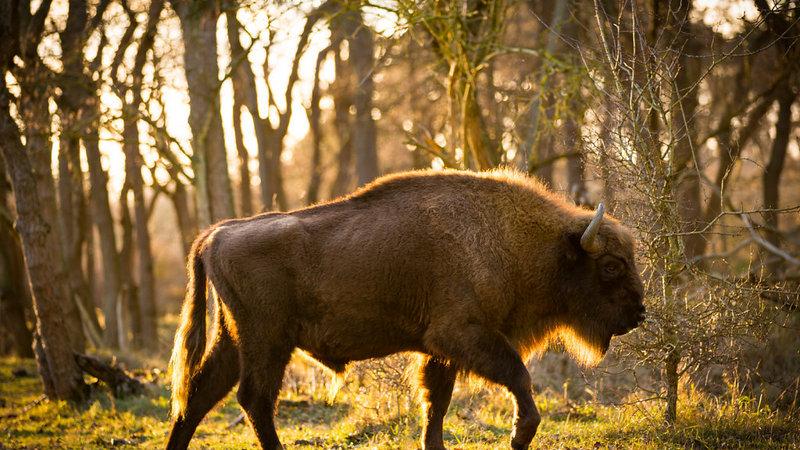Zandvoort Safari: Auf den Spuren der tierischen Ur-Einwohner Europas