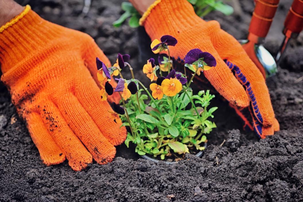 Typische Fehler, die Anfänger im Garten vermeiden sollten.
