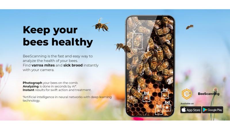 Jetzt können Imker mit ihren Smartphone und KI kranke Brut finden