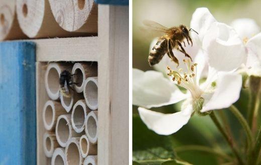 #beepink: Mit blühenden Gärten für mehr Artenvielfalt