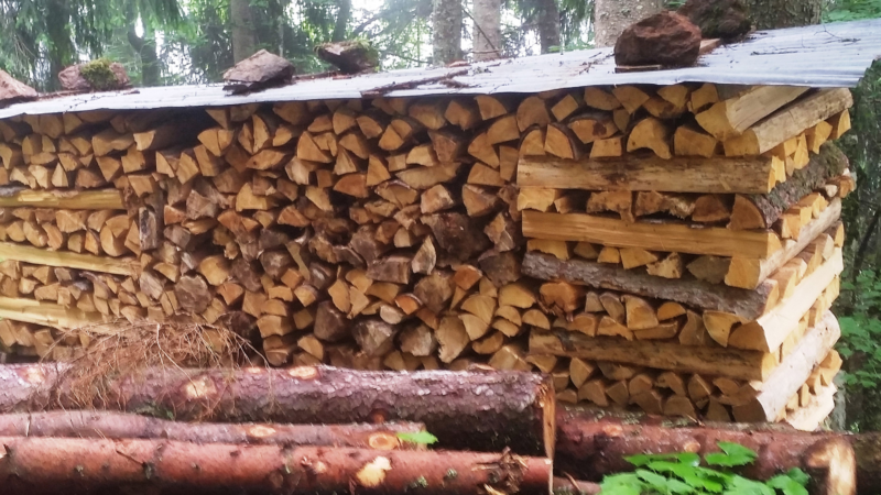 Holz als Brennstoff: Heizen gegen den Klimawandel