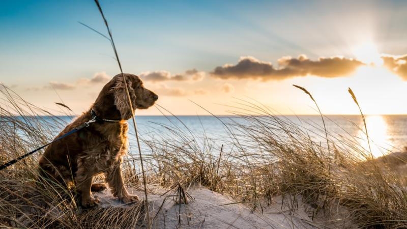 Urlaub mit Hund Ferienhäuser Reethäuser am Meer eingezäunt damit Ihr Urlaub am Meer ein voller Erfolg wird