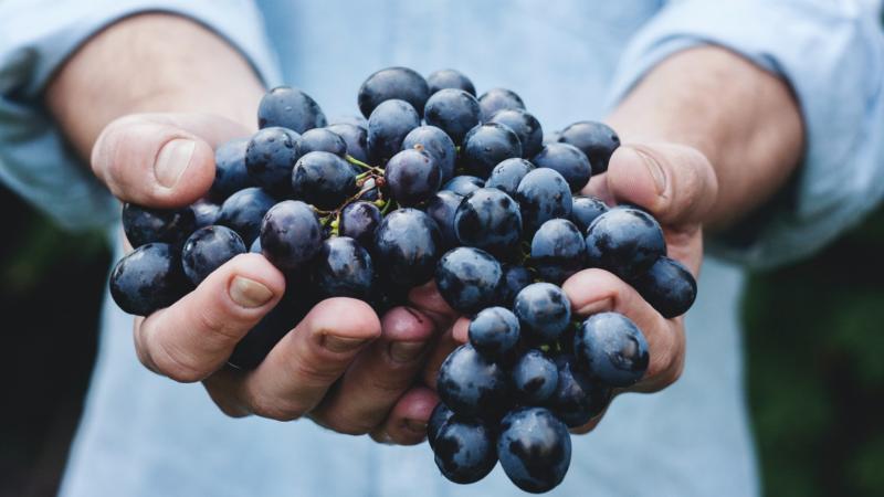 LagenCup – die 10 besten Rotweine Deutschlands