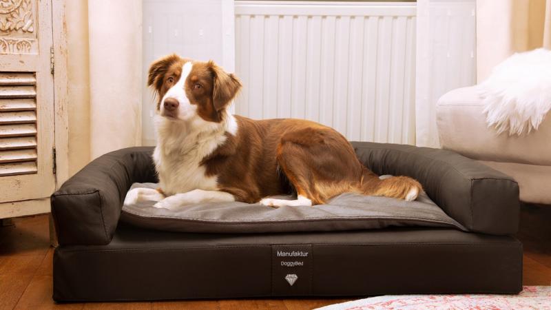 Was sind die 5 besten Hundebetten?