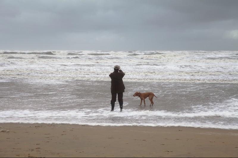 Urlaub mit Hund: Zandvoorts Strand heißt Vierbeiner herzlich willkommen
